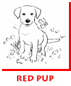 Waitsel Spot Illustration Red Pup
